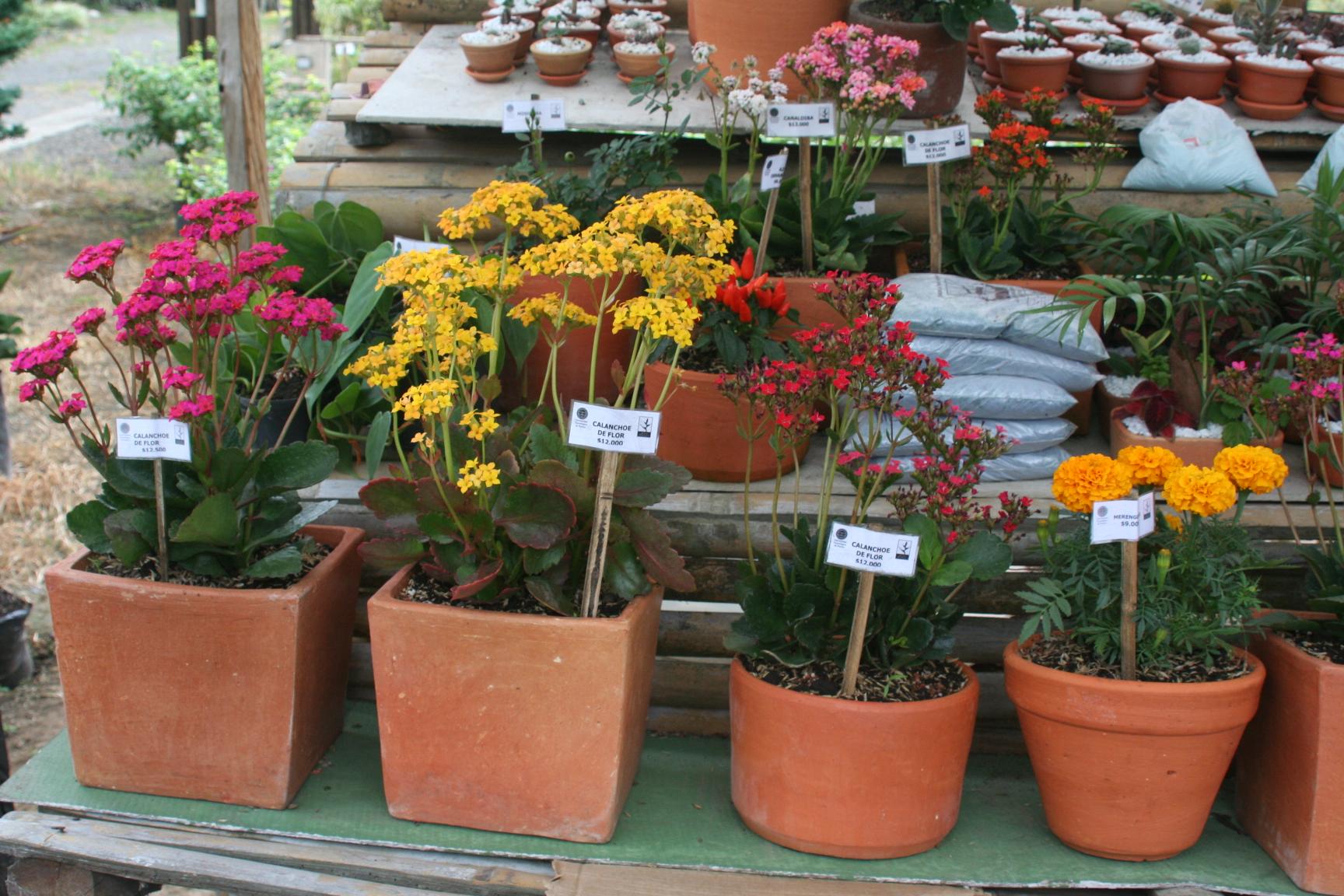 Jard n bot nico adquiere nuestras plantas for Plantas que hay en un vivero